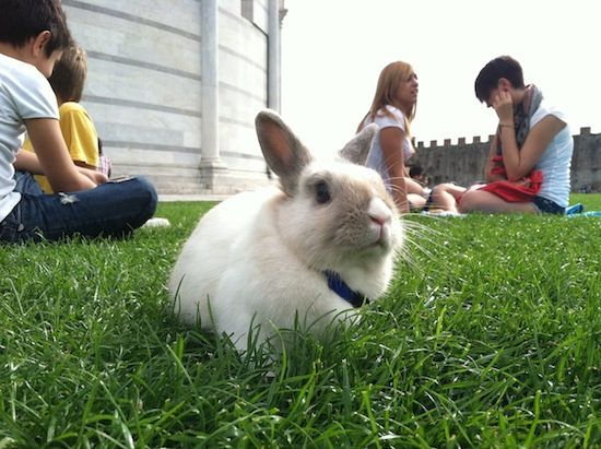 Pisa, Italy bunny rabbit