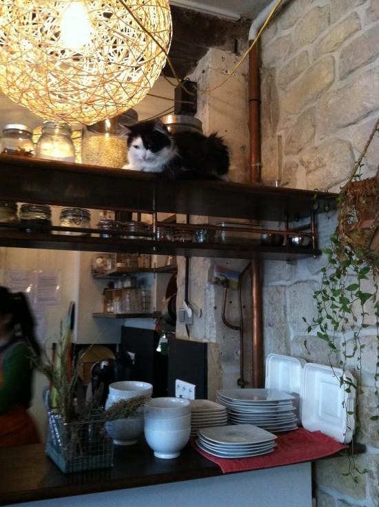 Kitties Voy Alimento