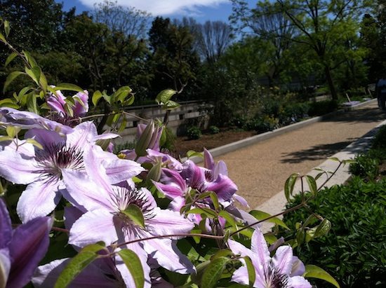Purple flowers in Washington, DC
