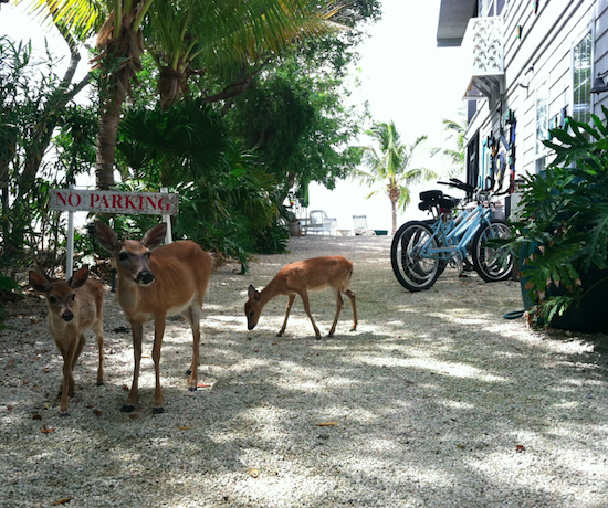 Deer Run B&B - Big Pine Key, FL