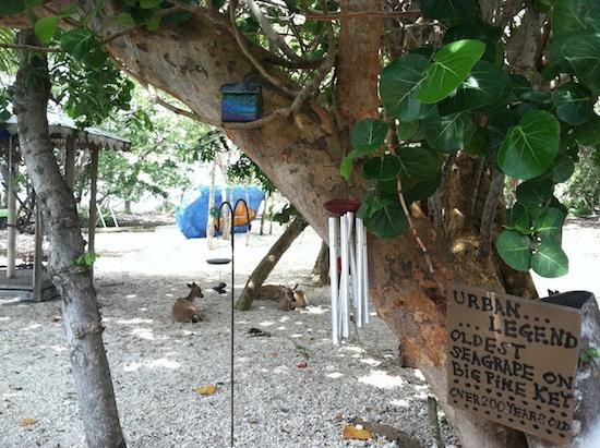 Vegan Bed & Breakfast - Deer Run in Big Pine Key, FL