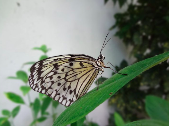 The Key West Butterfly Nature Conservatory - Key West, FL