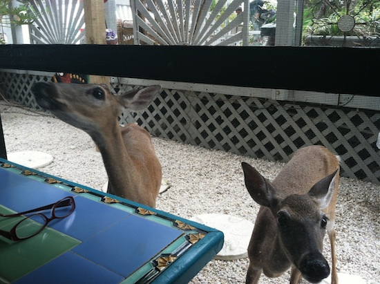 Vegan Bed & Breakfast - Deer Run in Big Pine Key, FL