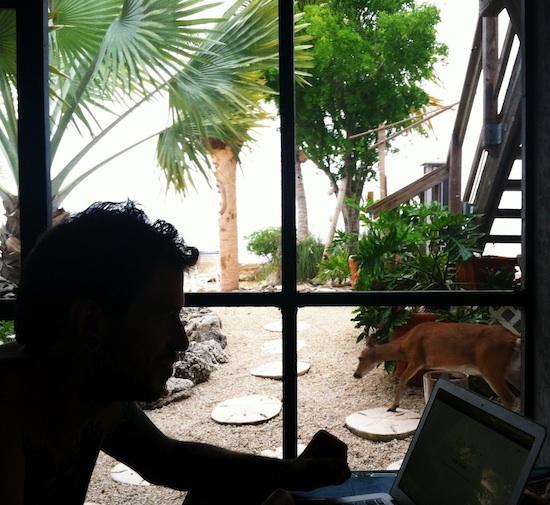 Deer Run B&B, 100% vegan - Big Pine Key, FL