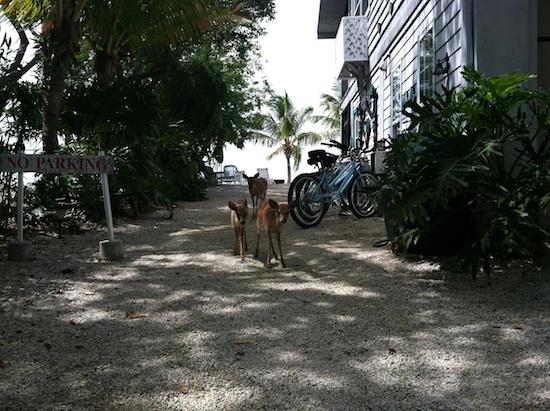 Deer Run B&B - Big Pine Key, FL