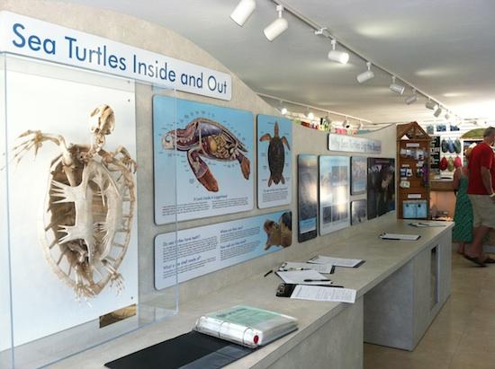 The Turtle Hospital - Marathon, FL