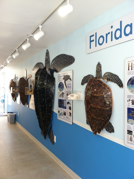 The Turtle Hospital - Marathon, FL