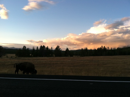 sunset bison