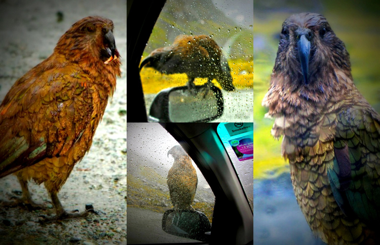 kea collage