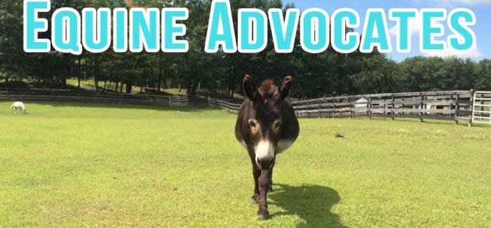 Equine Advocates – DAILY Vlog, Ep. 39