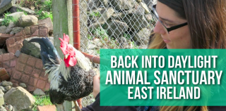 Back Into Daylight Animal Sanctuary: East Ireland