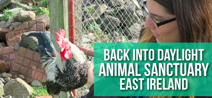 Back Into Daylight Animal Sanctuary: East Ireland