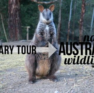 Native Australian Wildlife – Sanctuary Tour, Vlog127
