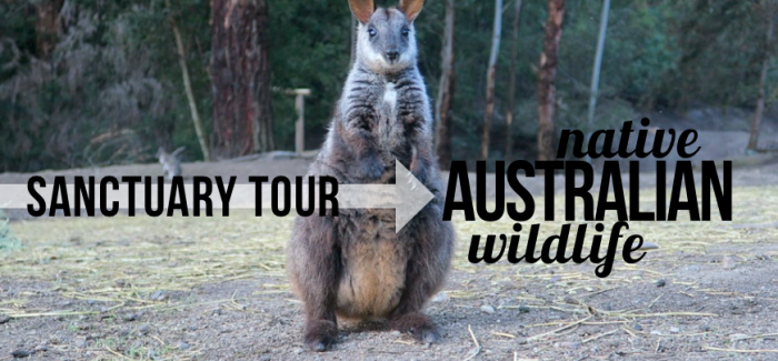 Native Australian Wildlife – Sanctuary Tour, Vlog127